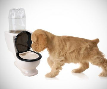 Toilet Water Dish for Pets