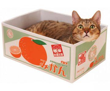 Satsuma Fruit Box Cat Bed