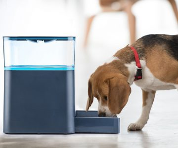 Babadio Automatic Pet Feeder